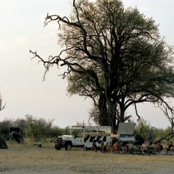 Buffalo Safari game viewing vehicle
