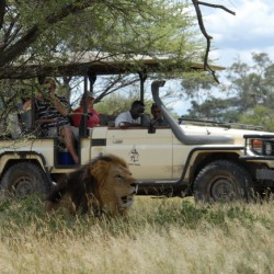Chiefs Camp game drive