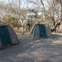 Buffalo Safari campsite