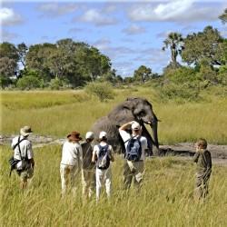 Stanleys Camp elephant wallow