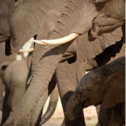 Moremi Camping safari elephants