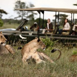 Sandibe Lodge game drive sighting