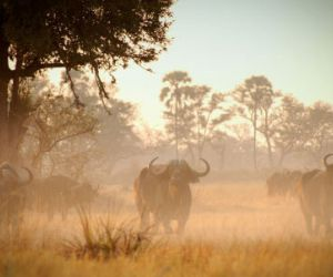 2-or-3-Day-Moremi-Safari-201409161235011.jpg